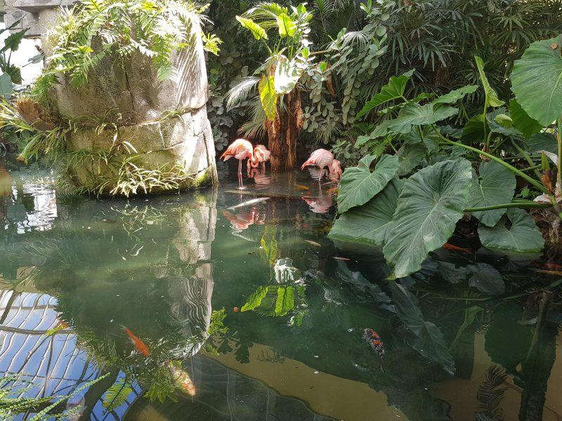 Parc Phoenix in Nice is een zeer goed betaalbaar recreatiepark met dieren, planten en een grote speeltuin. Een prima uitje voor kinderen dus!