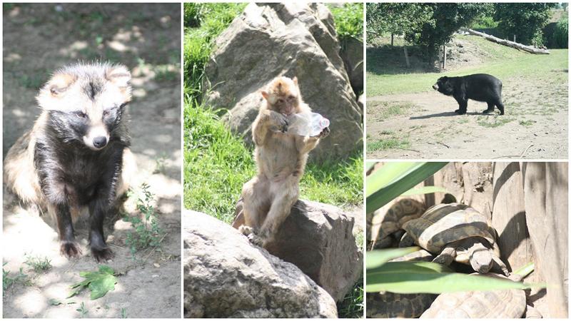 Blog dierenrijk sesamstraat1