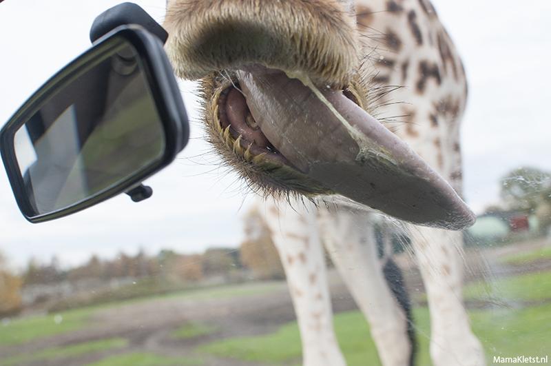 giraf-tong