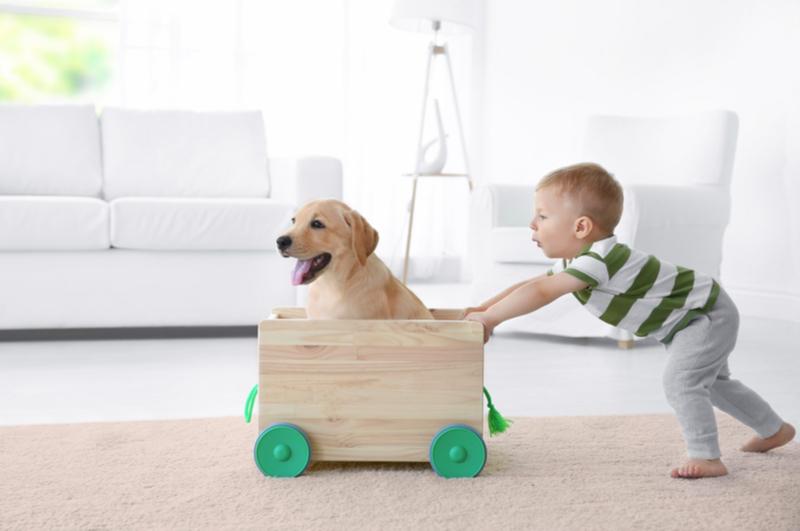 Waarom zou een kind met een hond moeten opgroeien? Het is heel gezellig hoor, een hond in huis, maar ook hard werken. En heb je wel tijd voor een dier tijdens alle drukte met de kinderen? Ik ben van mening dat een hond prima in een (druk) gezin past. En vertel je waarom.