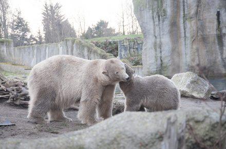 Diergaarde Blijdorp is met recht een van de leukste dierentuinen van Nederland. Het is een groot park, met verschillende werelddelen, waardoor er heel veel dieren te bekijken zijn. Leuk voor kinderen en de rest van het gezin. Je koopt ook makkelijk kaartjes met korting.