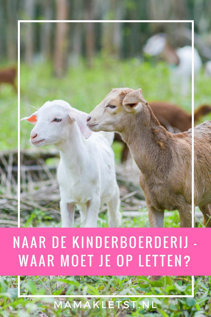 Kinderboerderij tips - Waar moet je op letten bij het bezoek aan een kinderboerderij en welke leuke kinderboerderijen zijn er allemaal te vinden in jouw buurt?