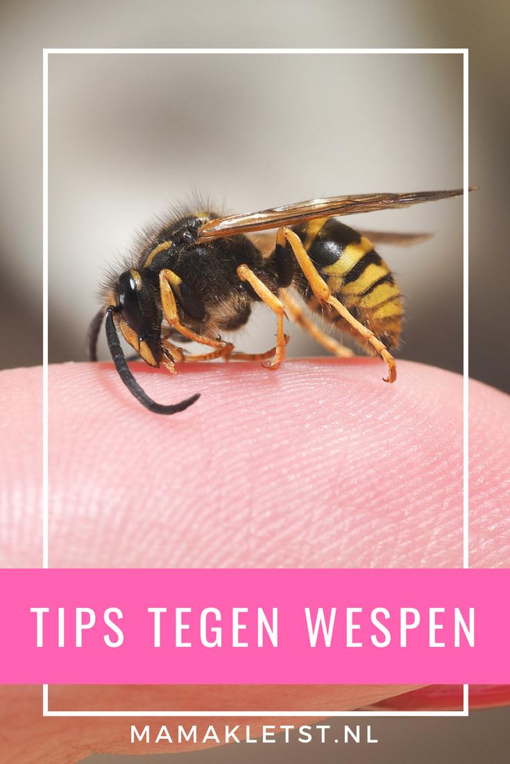 Met deze tips tegen wespen voorkom je gestoken te worden. Lees wat je moet doen als je bent gestoken door een wesp en hoe je ze bestrijd.