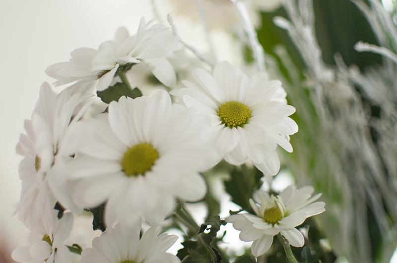 witte-bloemen